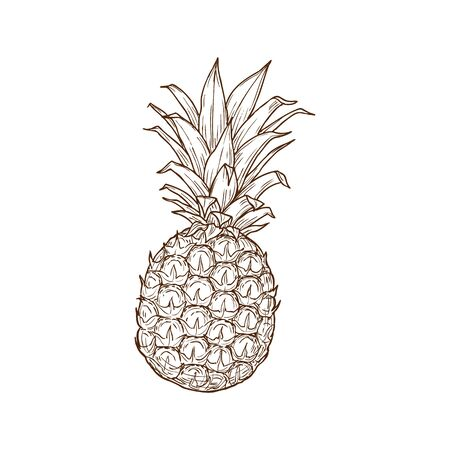 Pineapple tropical fruit isolated sketch icon. Vector exotic ananas with bunch of leaves, tropical food dessert. Hand drawn summer fruit, juicy vegetarian food ripe organic dessert, whole ananas Vector Illustration