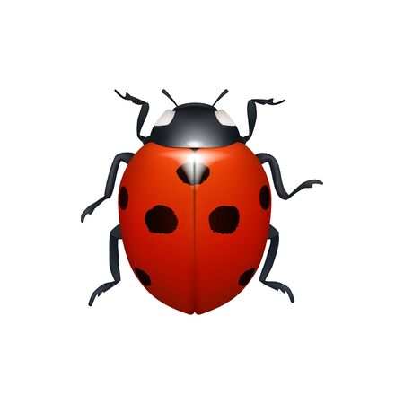 Ladybug isolated red beetle black spots, realistic lady bug. Vector spotted flying animal with antennas, tiny lady-bird funny crawling bug with circles. Cartoon ladybird with six legs and antennas
