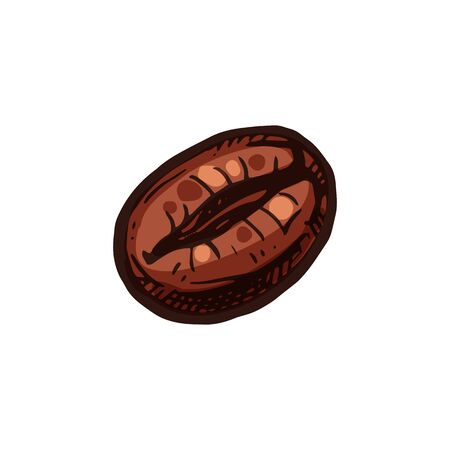 Coffee bean isolated americano drink ingredient. Vector coffee cherry or berry, aromatic americano or cappuccino ingredient realistic sketch. Raw fruit of coffee plant, hot morning espresso bean
