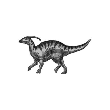 Parasaurolophus ornithopod dino isolated animal hand drawn sketch. Vector gray dinosaur, skull with crest, prehistoric creature. Walkeri grey dino, extinct herbivorous ornithopod dinosaur Vector Illustration