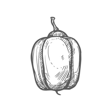 Ackee or aki Blighia sapida fruit isolated hand drawn monochrome sketch. Vector Jamaica fruit, exotic tropical food, whole ripe berry. Ackee apple, african Jamaican caribbean achee, summer dessert