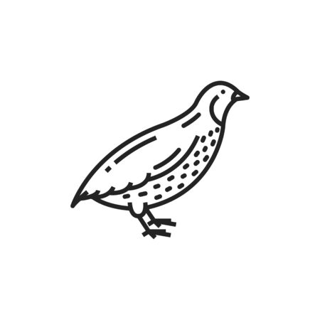 Quail bird isolated monochrome icon. Vector partridge farm animal, poultry and hunting