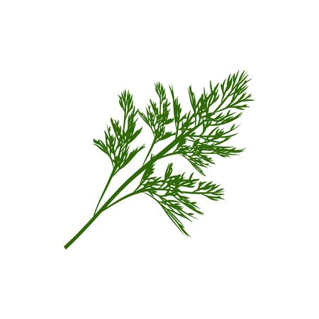 Fennel or dill herb isolated leafstalk branch. Vector green aromatic flavorful stem used in cookery Иллюстрация