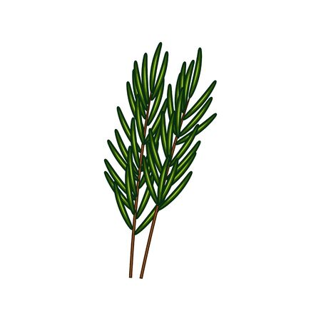 Rosemary or lemongrass isolated culinary herb. Vector herbal seasoning, kitchen condiment