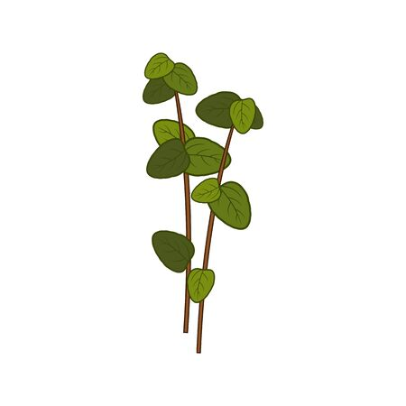 Marjoram or oregano isolated green seasoning leaf. Green leaves of flavoring herbal plant Vettoriali