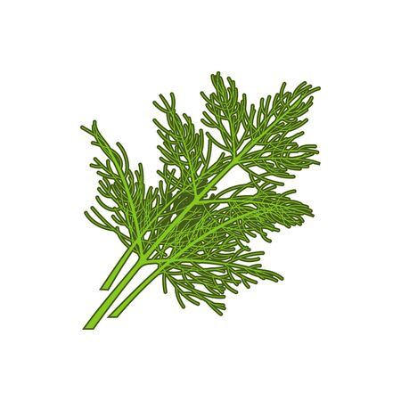 Dill herb or wild fennel branch isolated kitchen herb. Vector green aromatic flavoring stem