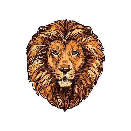 Lion head isolated animal portrait. Vektorové ilustrace