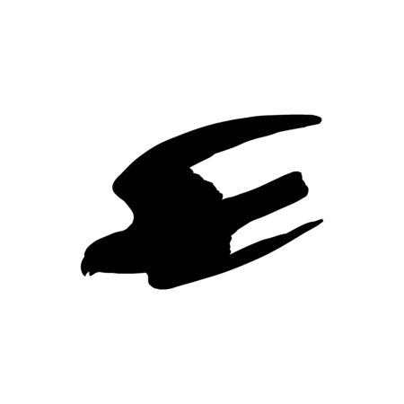 Flying eagle with outspread wings isolated bird. Vector poultry hunting season mascot, black falcon