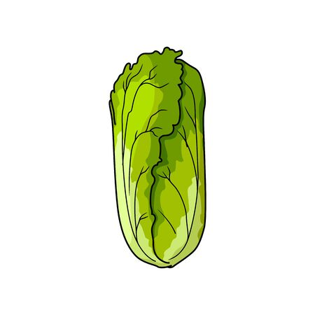Romaine lettuce isolated on white