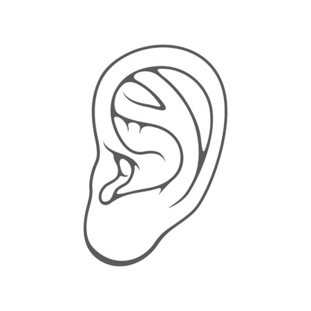 Human ear, organ of hearing isolated.