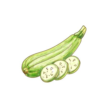 Green zucchini vegetable cut on pieces and whole isolated sketch. Vector vegetarian food, smooth-skinned summer squash