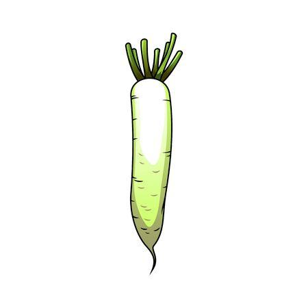 Japanese radish cartoon vector illustration. Chinese radish harvest in farming industry. Vegetarian, vegan nutrition ingredient. Fresh daikon agricultural produce. Grocery store banner design element