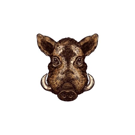 Wild pig or swine with sharp tusks isolated sketch. Vector warthog boar head mascot
