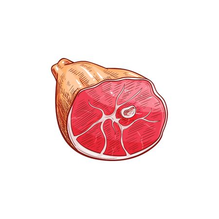 Gammon, sketch of beef or pork leg isolated raw butchery food. Vector jamon, animal meat on bone Illustration