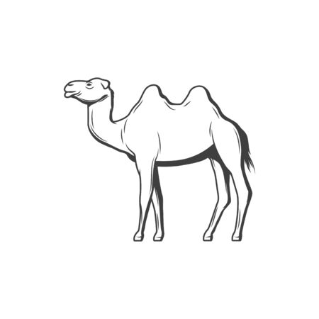 Camel humped arabian goof isolated animal. Vector domestic animal of Egypt, Egyptian wildlife transport