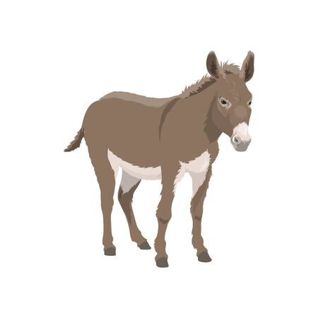 Donkey isolated farm livestock animal. Vector or small horse mule, domestic cartoon cattle