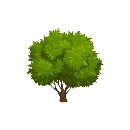 Bonsai tree isolated single mango or oak. Vector exotic tree with big trunk and green branches with leaves, tall leafy summer or spring plant. Broadleaf garden or forest wood tree, environment object