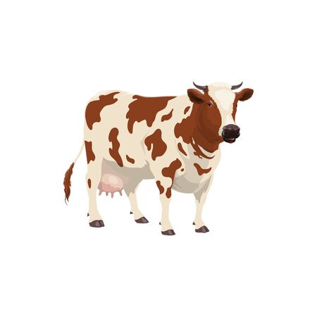 Cow livestock animal isolated spotted beef. Vector dairy cattle, spotted heifer giving milk