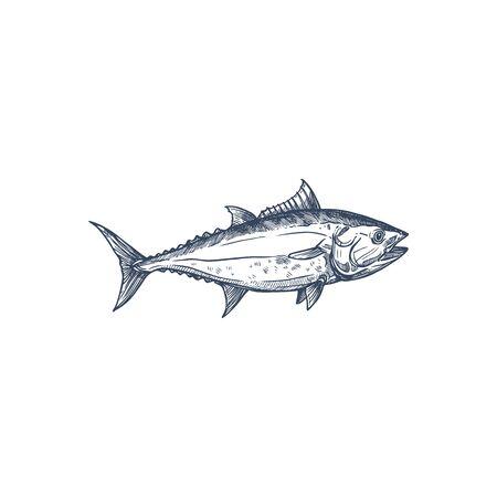 Tuna predatory schooling fish isolated bluefin monochrome sketch. Vector fishing sport mascot, tunny underwater animal. Tribe Thunnini, Scombridae mackerel, predatory schooling fish hand drawn