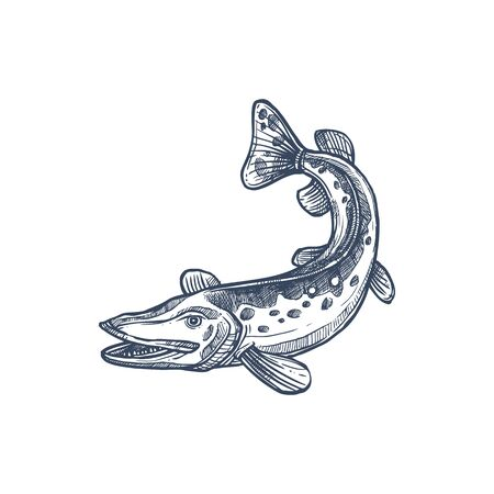 Pickerel or esox fish, isolated freshwater pike monochrome sketch. Vector elongated torpedo-like predatory fish, mackerel pike or Pacific saury. Hand drawn walleye, Sander vitreus Esox or pickerel