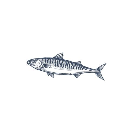 Pelagic fish, family Scombridae isolated mackerel monochrome sketch. Vector atlantic chub Wahoo scombrid fish, underwater animal. Short indian mackerel, fishing sport trophy hand drawn short mackerel
