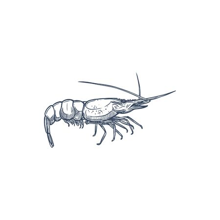 Prawn isolated vector shellfish crustaceans. Vector Palaemon serratus or Crangon crangon, appetizer snack, tiger sea shrimp monochrome icon. Shrimp underwater marine animal with long whiskers Illustration