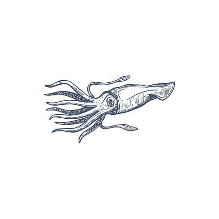 Aquatic squid with sucks and tentacles isolated monochrome aquatic creature. Vector armhook squid, giant calamari shellfish, raw marine seafood. fishing sport mascot, atlantic mollusk