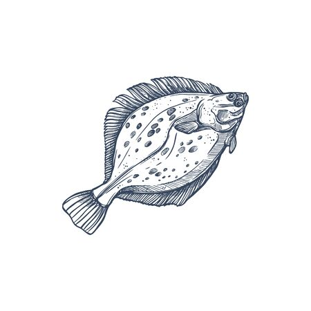 Flounder flatfish species isolated monochrome sketch. Vector demersal fish living at bottom of oceans. Gulf or southern summer flounder, european winter Halibut olive flounders, Paralichthys albigutta