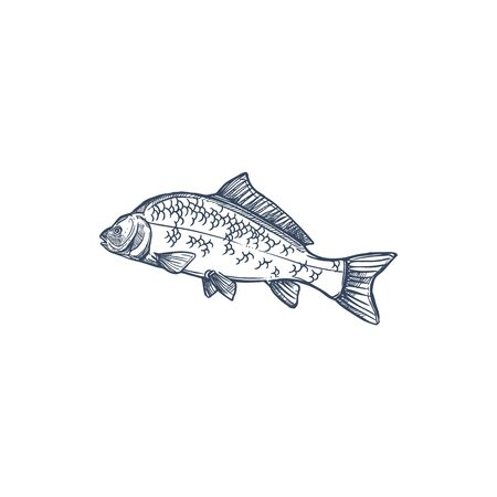 Carp freshwater fish of family Cyprinidae isolated monochrome icon. Vector common silver bighead carp, grass crucian hand drawn aquatic animal. Fish inhabit lakes, ponds, and slow-moving rivers Ilustração