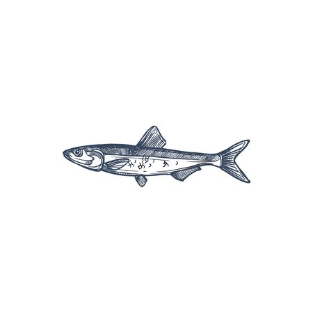 Small shoaling fish anchovy isolated Anchoa monochrome sketch. Vector European anchovy, Engraulis encrasicolus, Anchoa, Anchoviella, Engraulis or Stolephorus, Thryssa. Hand drawn forage fish