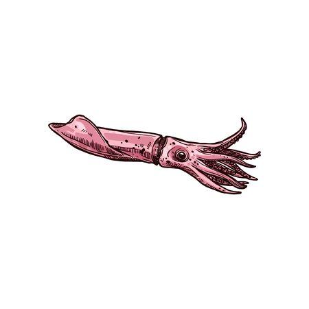 Croquis isolé d'animaux aquatiques dessinés à la main de calmar, vue de profil. Calmar de vecteur avec corps allongé, grands yeux et huit bras. Mascotte de personnage sous-marin marin, mollusque céphalopode calamar crochu