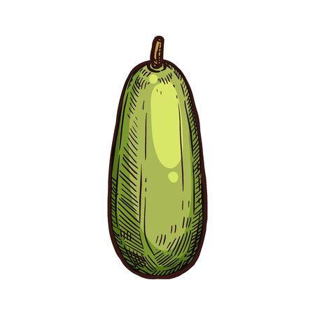 Kuruba fruit vector sketch. Exotic tropical kuruba or banana passionfruit fruit Illustration