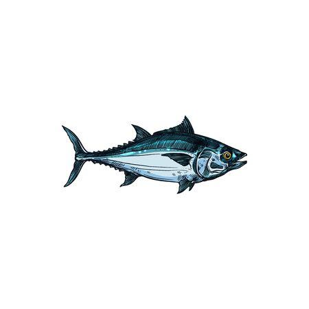 Bluefin tuna blackfin longtail fish isolate sketch. Vector Scombridae mackerel, predatory schooling fish hand drawn underwater animal. Tunny tribe Thunnini, fishery fishing sport mascot