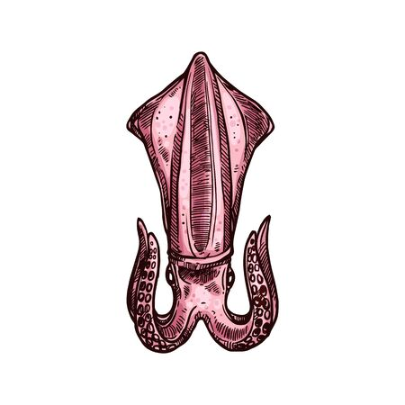Armhook squid isolated red prepared seafood sketch. Vector marine underwater animal, giant shellfish aquatic organism. Neritic sharpear enope red squid, cooked or boiled sea food, hand drawn