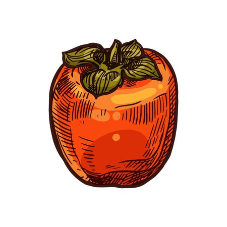 Persimmon fruit vector sketch isolated icon. Exotic tropical persimmon kaki fruits Stock Illustratie