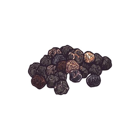 Black pepper seeds isolated peppercorn seasoning. Vector all spices pepper condiment grains. Dried spice, allspice peppery culinary flavoring, whole grains hand drawn sketch, aromatic pimento Illustration