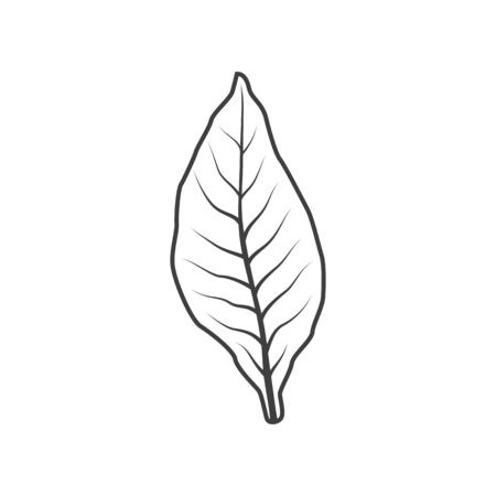 Tobacco leaf isolated monochrome icon. Vector dry leafage to make cigarettes or cigars