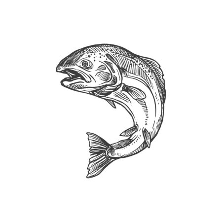 Salmon and trout fish vector sketch isolated icon. Fishing symbol, seafood and fisher catch freshwater river trout and saltwater sea salmon in monochrome sketch