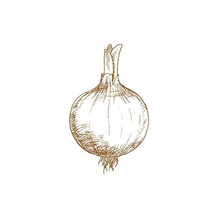 Onion bulb with leaves isolated monochrome sketch. Vector turnip food, raw vegetable plant