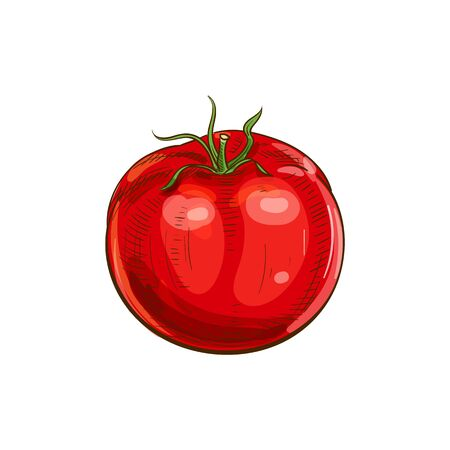 Tomato isolated  icon. Vector berry vegetable, cherry tomato with leaf