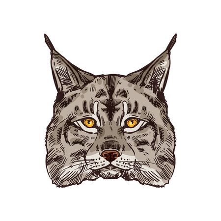 Lynx animal for hunting sport open season. Wild or bobcat predator head isolated icon, wildcat with gray fur and black tufts on ears for zoo mascot, hunter club or hunting camp design