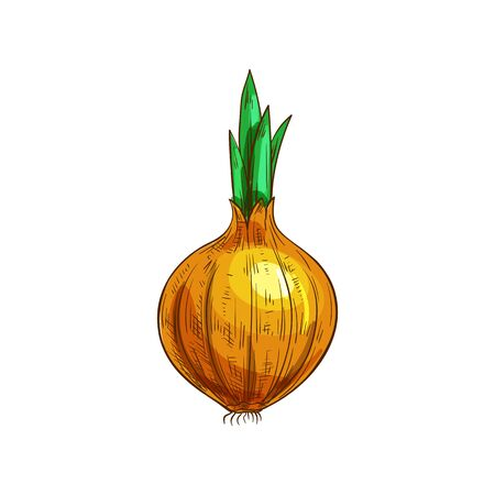 Onion bulb with leaves isolated object. Vector turnip food, raw vegetable plant
