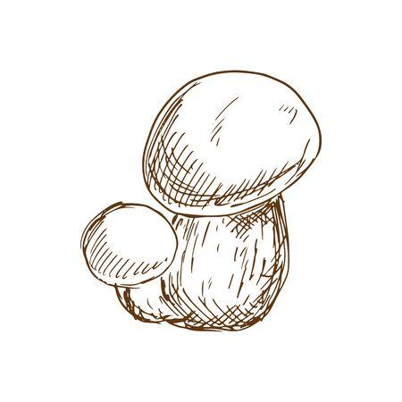 Fungus edible mushroom isolated boletus hand drawn sketch. Vector monochrome forest food, fall plant