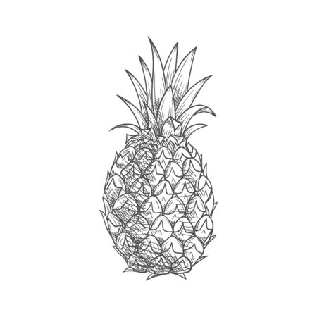 Ripe pineapple fruit sketch with waxy leaves on the top and rough scaly peel