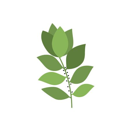 Laurel leaves on branch isolated bay leaf condiment. Vector kitchen herb, natural condiment