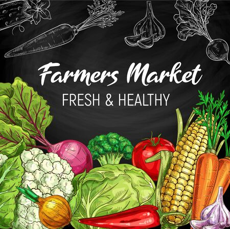 Farm market vegetables, chalkboard vector sketch. Vegetarian salads and vegan organic food, cauliflower and broccoli, cabbage, corn and pepper, tomato, beet and corn, garlic and carrot