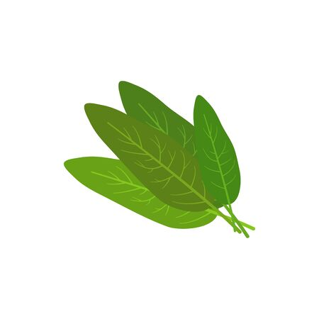 Bay leaves bunch isolated green herbs. Vector herbal seasoning, natural condiment, laurel leaf