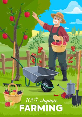 Farming and harvesting vector poster, farmer man gathering apples harvest to wicker basket. Organic natural agrarian agriculture, farm vegetables and equipment spade, watering can and wheelbarrow
