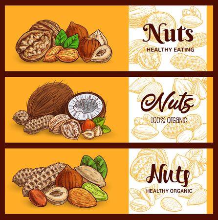 Nuts and cereals sketch banners, cashew and almond, peanuts and pistachio seeds, vector. Vegetarian and vegan natural protein raw food coconut, hazelnut and walnut, muesli breakfast ingredients Vecteurs