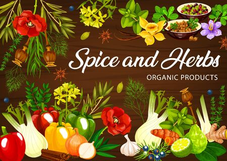 Spices and herb seasoning and herbal flavorings, vector cooking condiment ingredients. Organic garlic and basil, culinary vanilla and cinnamon, celery, onion and horseradish, sage and bay leaf